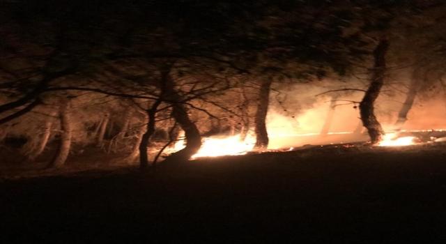 Enez'de çıkan orman yangını söndürüldü