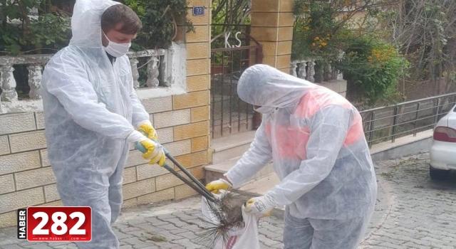 Süleymanpaşa Belediyesi çam kese böceği mücadelesine başladı