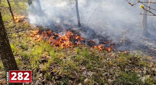 Tekirdağ'da ormanlık alanda çıkan yangın kontrol altına alındı