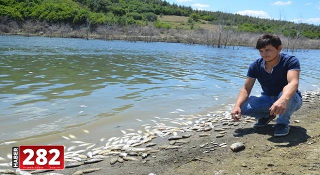 Çokal Barajı'nda çok sayıda ölü balık kıyıya vurdu