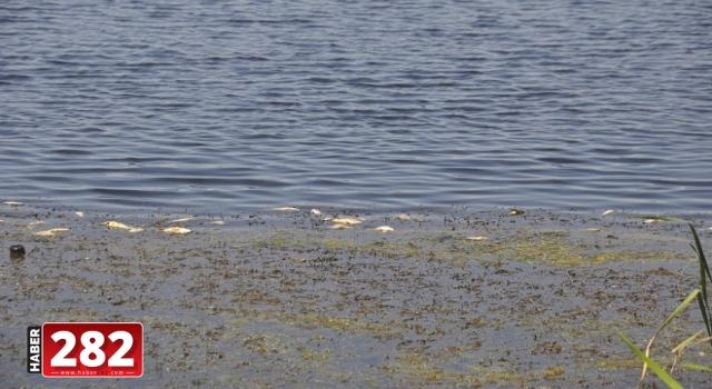Muratlı'da balık ölümleriyle ilgili inceleme başlatıldı