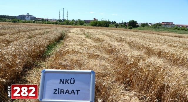 NKÜ'de geliştirilen yerli ve milli çeşitleri çiftçilerin değerlendirilmesine sunuldu