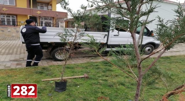 Ergene Belediyesi Hem Ağaçlara Bakım Yapıyor Hem Yeni Ağaç Dikiyor