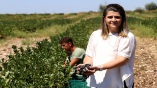 Fidanını getirdiği Avrupa'ya meyvesini ihraç edecek