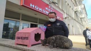 """""""Garip"""" isimli kedi Hükümet Konağı'nın maskotu oldu"""