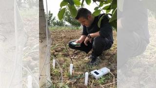 Ceviz ağaçlarının su kullanımı TÜBİTAK destekli projeyle analiz edilecek