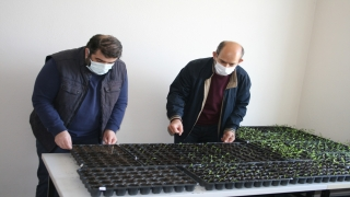 """""""Efsane renk"""" Edirne kırmızısının elde edildiği bitkinin ekim alanları genişliyor"""