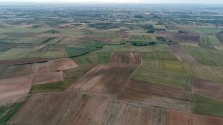 Kırklareli'nde ilkbahar yağışlarının buğday ve ayçiçeği verimini artırması bekleniyor