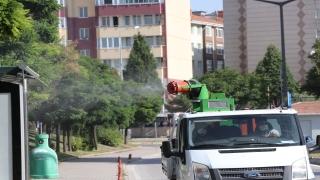 Edirne'deki popülasyonu artan dantel böceğiyle mücadele