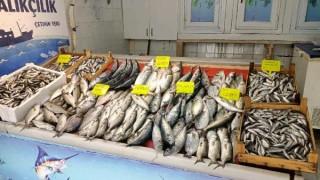 Balıkçıların yüzünü lüfer ve istavrit güldürdü