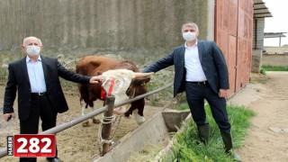 """Edirneli 81 yaşındaki çiftçi """"Biz Bize Yeteriz Türkiyem"""" kampanyasına dana bağışladı"""