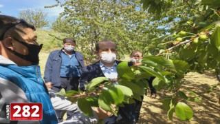 Tarım ve Orman İl Müdürü Öcal, Şarköy'deki kiraz bahçelerini inceledi