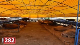 Çorlu'da hayvan pazarında esnafın yüzü gülüyor
