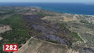 ÇOSB, Çanakkale'de yanan ormanlık alanı yeniden ağaçlandıracak