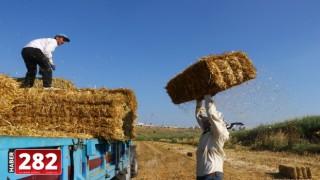 Mevsimlik saman balyası işçilerinin kavurucu sıcaklardaki ekmek mücadelesi