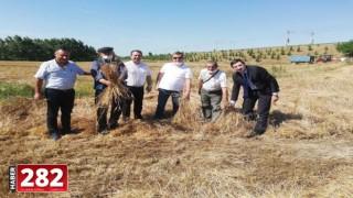 Tekirdağ'da 10 bin yıllık siyez buğdayının hasadı yapıldı
