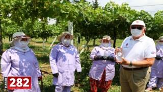 Türk Böbrek Vakfı Başkanı Erk, tarlada çalışan kadınlara su dağıttı