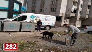 Sokakta yaşayan canlar tam kapanmada Süleymanpaşa Zabıtasına emanet